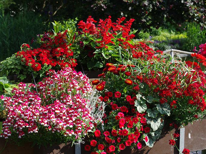 Rote Blumenfreude Fur Balkon Und Terrasse