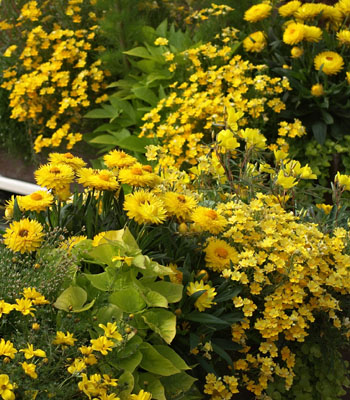 Pflanzen in nanopics den balkon f r den sommer vorbereiten - Pflanzen fa r flur ...