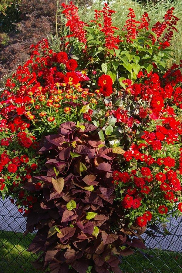 Drei Einfache Tipps Zur Pflege Ihrer Sommerblumen Sommer Blumen Pflanzen Pflege