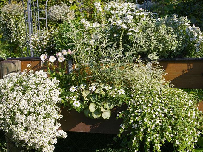 Top Pflanzen für den Balkon in weiß @IY_03